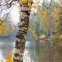 Осень в старом парке 3 :: Виталий