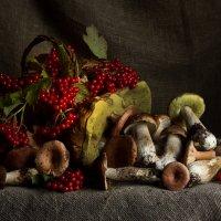 Тоже про грибы. :: Ирина Чикида