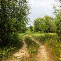лесной тракт :: Анна -