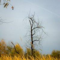 Травы           Осенний колер :: Алексей (АСкет) Степанов