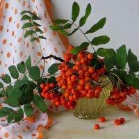 Ах, ягоды осенние, красивы, но горьки... :: Татьяна Смоляниченко