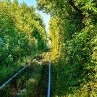 Зеленый тоннель :: Юрий Шапошник