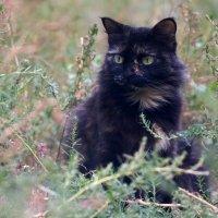 серьезная кошка :: Дмитрий Барабанщиков