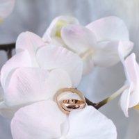 орхидея и кольца :: Ольга Русакова