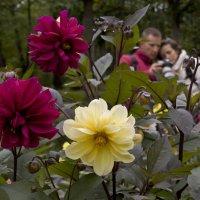 Чьи цветы лучше? :: Александр Петров
