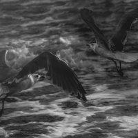 Чайки и море...Одесское побережье! :: Александр Вивчарик