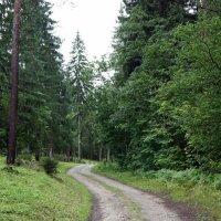 Дорога вокруг Пюхтицкого женского монастыря :: Елена Павлова (Смолова)