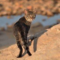 Морской кот. :: Leonid Korenfeld