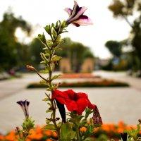 Парковые цветы :: Евгений