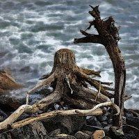 Деревянный Осьминог и его преданная Жирафа :: Константин Николаенко