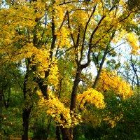 Осень :: Victoria