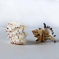 Подарок морей :: Наталья Джикидзе (Берёзина)