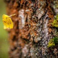 Падают листья :: Сергей Козлов