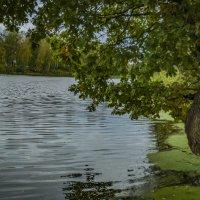 Дуб у озера :: Андрей