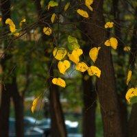 Осенняя зарисовка :: Ольга