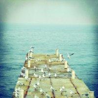 Чайки і море :: Таня