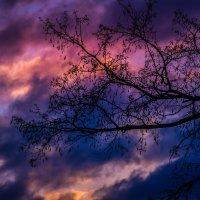 дерево на закате :: Ксения смирнова