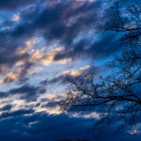 утро.....и дерево :: Ксения смирнова