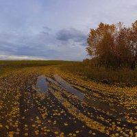 Я с осенью в ладу 4 :: Сергей Жуков
