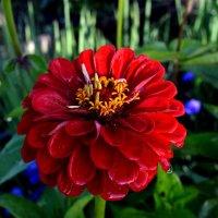 цветы :: AlerT-STM 1