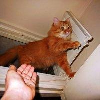 Прыгаю!... Давай помогу! :: Елена Федотова