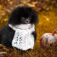 Осень - не повод грустить.  :: Екатерина Бражнова