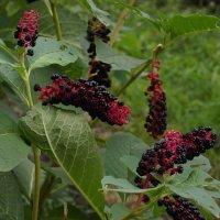 Неизвестное растение :: София