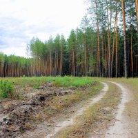 Лесными дорожками. :: Валентина ツ ღ✿ღ