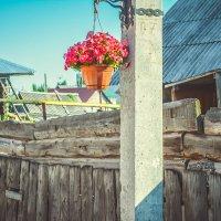 Цветы на столбе :: Света Кондрашова
