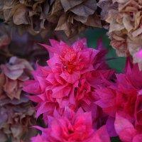 Цветы. Живые и мертвые. :: Dmitry Swanson