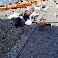 Птичий рай :: Natalia Harries