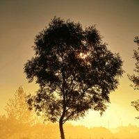 На рассвете... :: Андрей Зелёный
