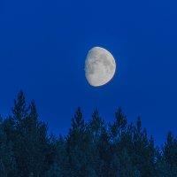 Северная луна в августе :: Алена Малыгина
