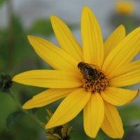 Осенний цветок. :: Lu Clever