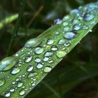 Мелодия дождя :: Сергей Гойшик