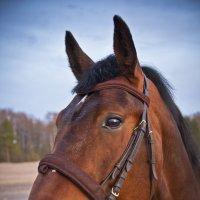 Лошадь на закате :: Денис Алексеенков