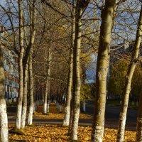 Осень в городе :: Ольга