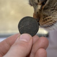 Кот Барсик и старая монета... :: Дмитрий Петренко