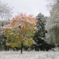 9 октября 2015 года. Первый снег :: Дмитрий Никитин