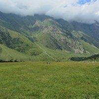 Альпийский луг :: Виталий Купченко