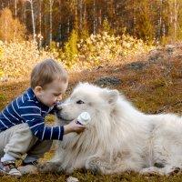 Белый Бим и мальчик Андрюха. :: алексей Зауральский