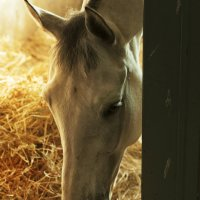 Лошадь :: Виктория Велес