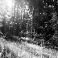 Солнышко в лесу. :: Андрей