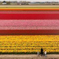 Голландия весной :: Эльвира Лопатина