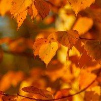листья осени :: Сергей Сол