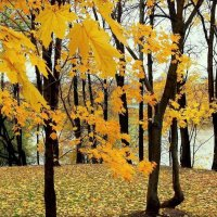 Осенний мотив :: Надежда Бахолдина