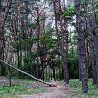 прогулка по лесу :: лиана алексеева