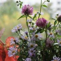 Цветы осени :: Калмакова Марина