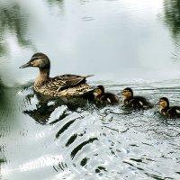 С мамой и в дождь не страшно! :: Екатерина Торганская
