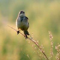 Пташка ранняя :: Екатерина Торганская